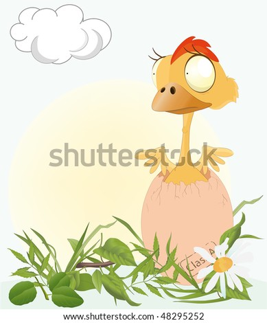 chicken on a meadow - stock photo
