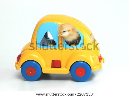 chicken on car - stock photo