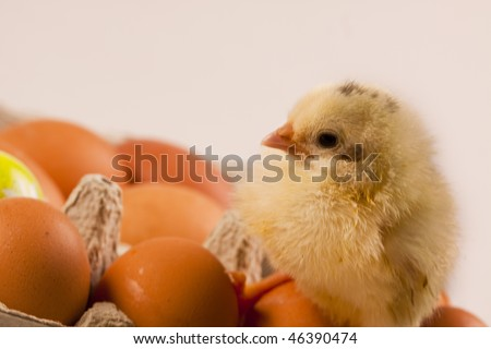 Chicken on eggs