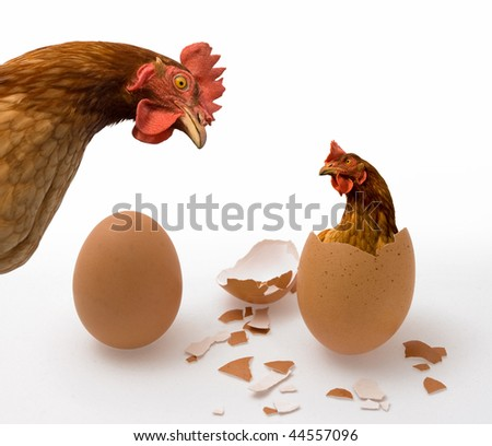 Chicken or Egg on White, Philosophy Question, Who Was the First. Idea of Philosophical Dilemma - stock photo