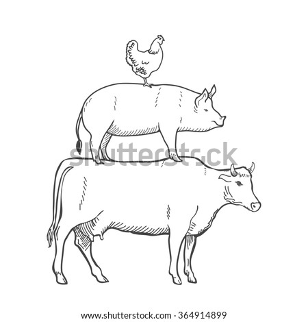 beef cuts diagram stock images  royalty
