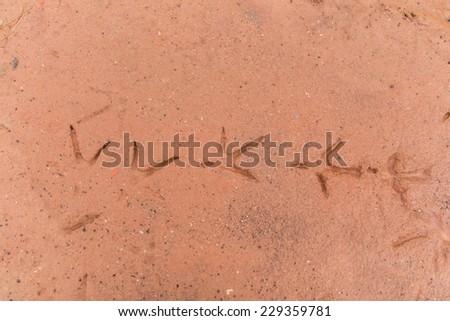 Chicken walking on ground red. - stock photo