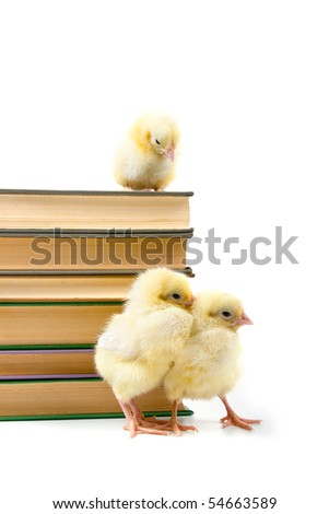 Chickens around books. The concept: new younger generation - stock photo