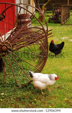 Chickens at a farm - stock photo