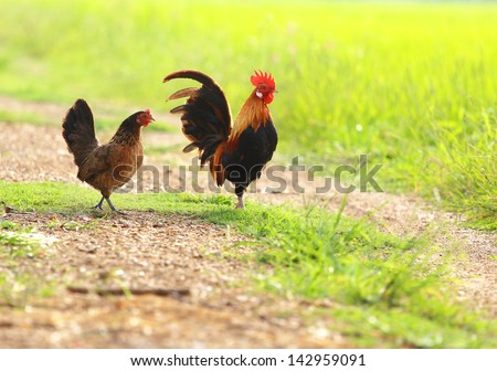 Chickens family on nature background