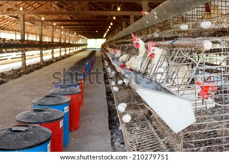 Chickens in battery cages laying eggs - stock photo