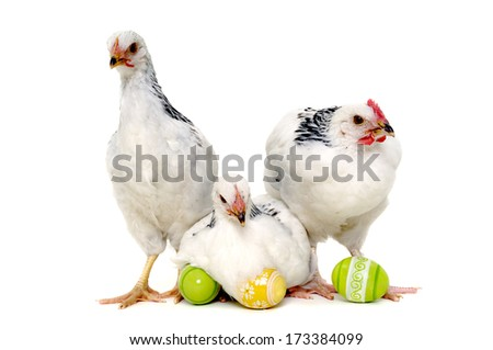 Chickens with easter eggs. Isolated on a white background. - stock photo
