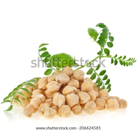 chickpeas plant  with seed heap close up,isolated on white background - stock photo