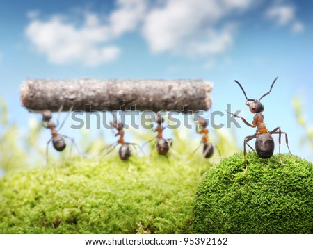 chief managing teamwork of ants - stock photo