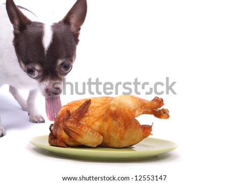chihuahua and chicken on the green plate on the white background - stock photo