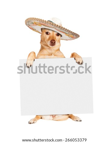 Chihuahua crossbreed dog sitting up and holding a blank white sign while wearing a Mexican sombrero hat - stock photo