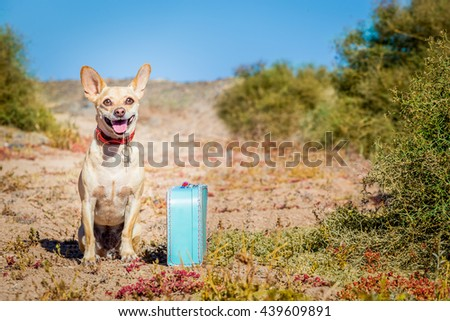 chihuahua dog abandoned and left all alone on the road or street, with luggage bag  , begging to come home to owners - stock photo