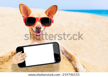 chihuahua dog at the beach with sunglasses taking a selfie with blank white empty smartphone screen - stock photo