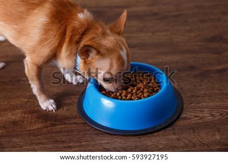 Cat Eats Dog Kibble