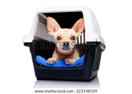 chihuahua dog inside a box or crate for animals, waiting for an owner, isolated on white background - stock photo