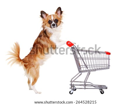 chihuahua dog pushing shopping cart - stock photo