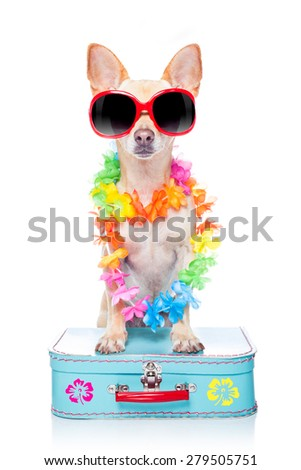chihuahua dog with bags and luggage or baggage, ready for summer vacation holidays at the beach, isolated on white background - stock photo