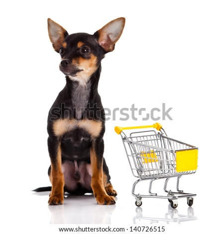 Chihuahua dog  with shopping cart - stock photo