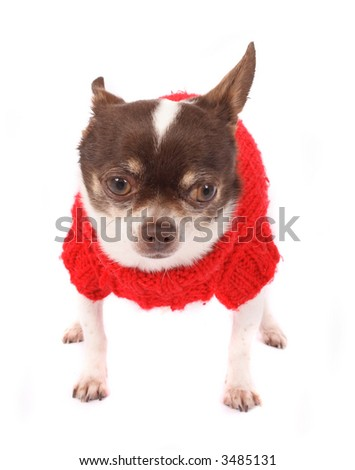 chihuahua in red dress