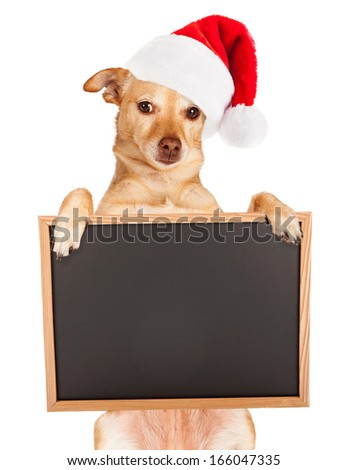 Chihuahua mixed breed dog wearing a red santa hat sitting up and holding a blank black chalk board sign for you to enter your message on. - stock photo