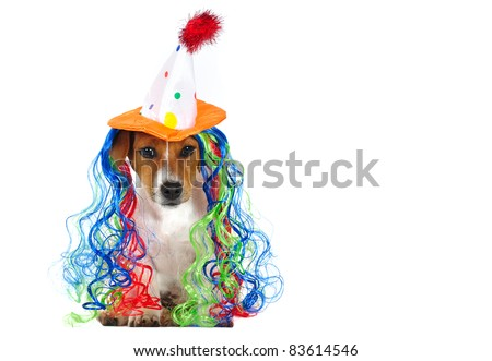 Chihuahua, 3 months old, sittins in front of white background, wearing a funny wig - stock photo