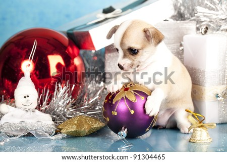 Chihuahua  puppy holding in the paws of a New Year's ball