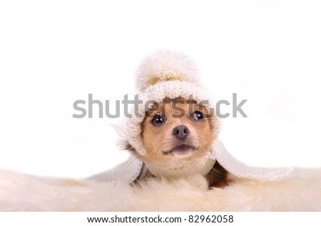 Chihuahua puppy looking up curiously, lying on white fluffy fur, isolated - stock photo