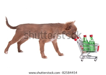 Chihuahua puppy pushing a shopping cart with two bottles of alcohol, isolated on white background - stock photo