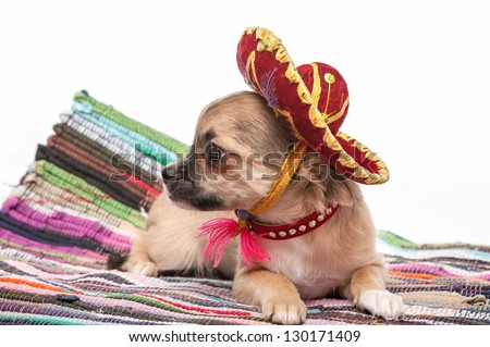 Chihuahua puppy wearing  Mexican hat and red collar on striped rug  against white background - stock photo
