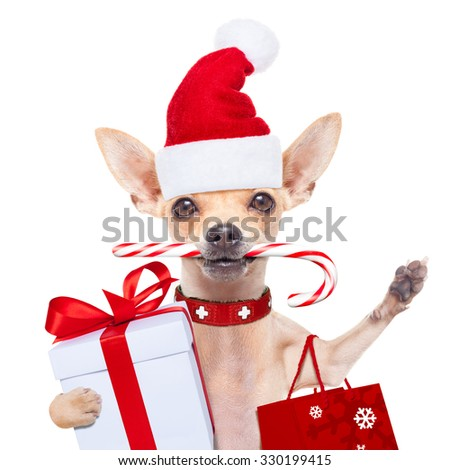 chihuahua santa claus shopping bag  dog  ready for christmas sale  , isolated on white background - stock photo