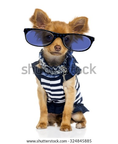 Chihuahua (2 years old) wearing glasses - stock photo