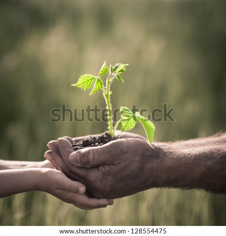 Child and senior man holding green plant in hands. Ecology concept - stock photo