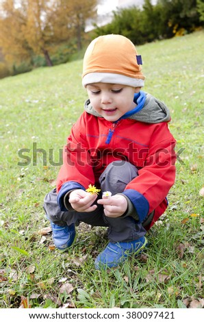 Child boy looking daisy flowers in the grass