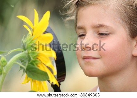 Child examining a sunflower with a magnifying glass - stock photo