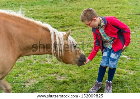 Child feeding horse - stock photo