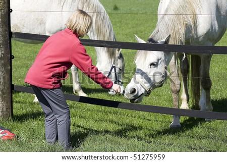 child feeding horse - stock photo