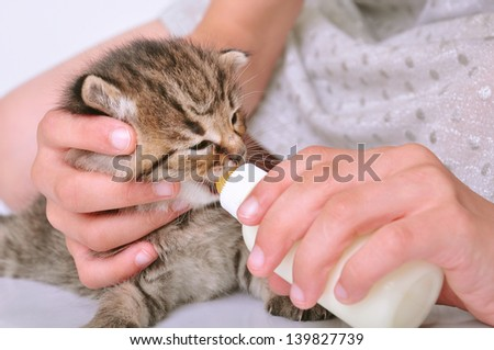 child feeding small kitten with milk from the bottle