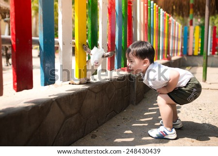 Child feeds goat at zoo. Asian boy looking at goat in nature