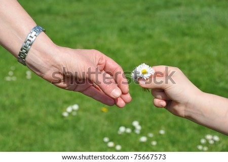 Child gives self picked flowers to mother - stock photo