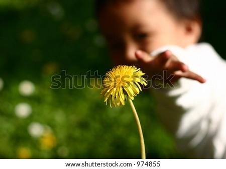 child hand giving flower stock photo edit now 974855 shutterstock