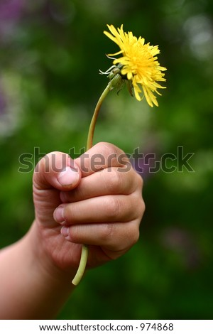 child hand giving flower stock photo royalty free 974868