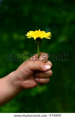 child hand giving flower stock photo royalty free 974890