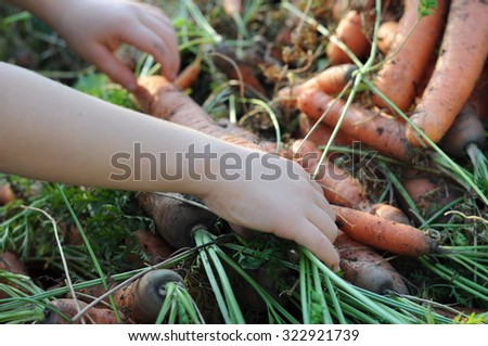 Child hand holding ecological carrot just from the garden bed