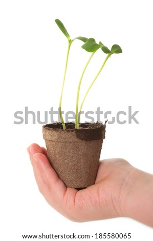 Child hand holding sunflower seedling in brown peat pot - stock photo