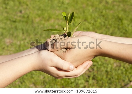 child hands holding sapling in hands - stock photo