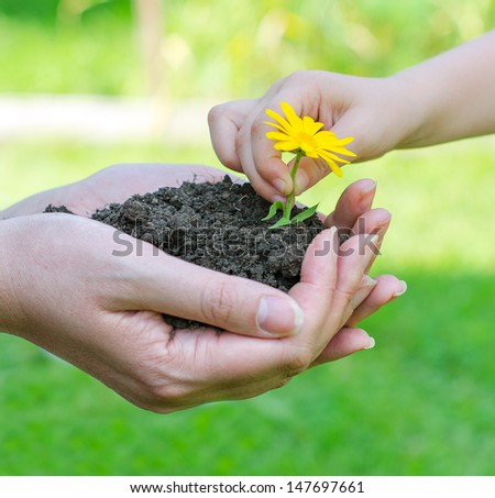Child hands putting flower into soil in female hands - stock photo