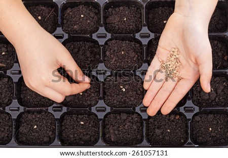 Child hands spreading seeds into germination tray - spring sowing closeup - stock photo