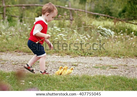 Child helps adults. He accompanies the ducklings in a pasture.