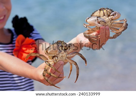 Child holding a crab in the hands of - stock photo