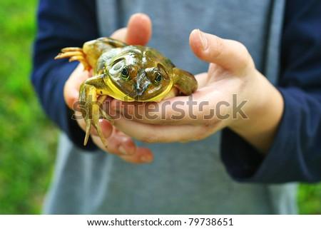 child holding frog - stock photo
